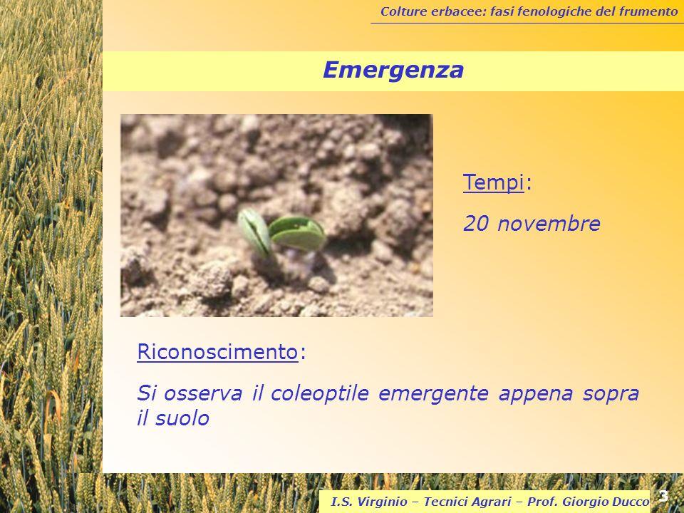 Emergenza Tempi: 20 novembre Riconoscimento: