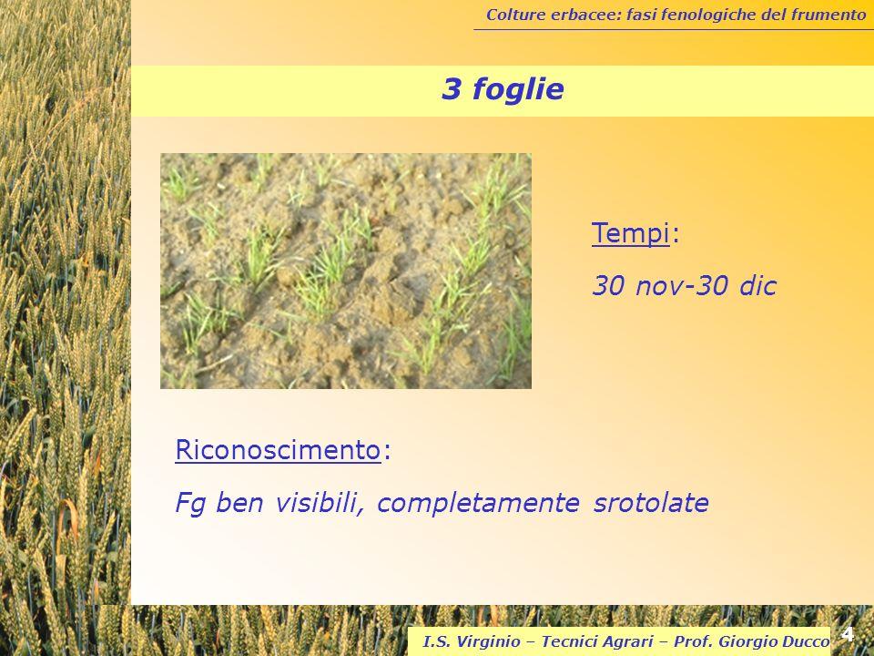 3 foglie Tempi: 30 nov-30 dic Riconoscimento: