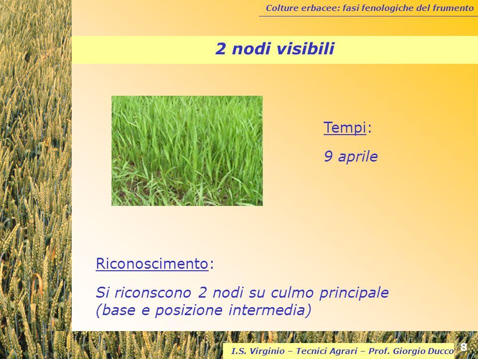 2 nodi visibili Tempi: 9 aprile Riconoscimento: