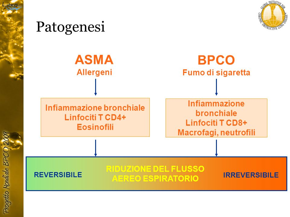 Patogenesi ASMA BPCO Allergeni Fumo di sigaretta