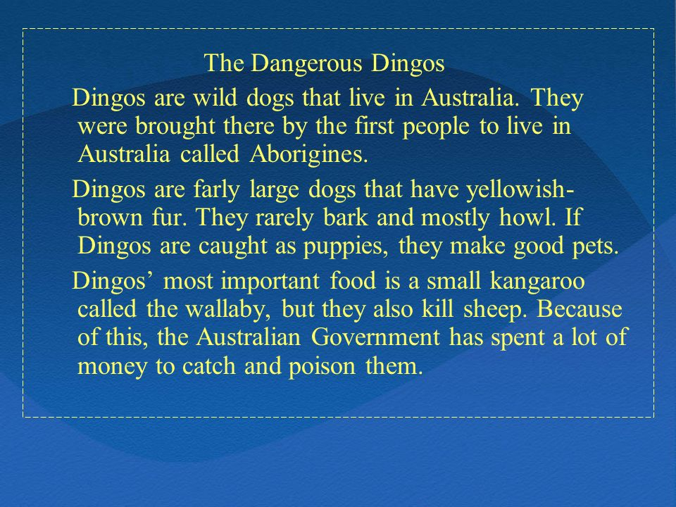 The Dangerous Dingos Dingos are wild dogs that live in Australia. They were brought there by the first people to live in Australia called Aborigines.