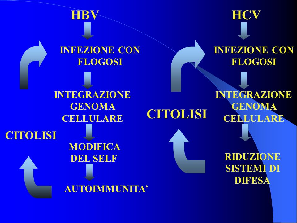 HBV HCV CITOLISI CITOLISI INFEZIONE CON FLOGOSI INFEZIONE CON FLOGOSI