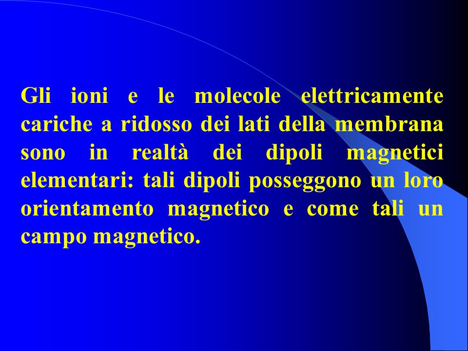 Gli ioni e le molecole elettricamente cariche a ridosso dei lati della membrana sono in realtà dei dipoli magnetici elementari: tali dipoli posseggono un loro orientamento magnetico e come tali un campo magnetico.