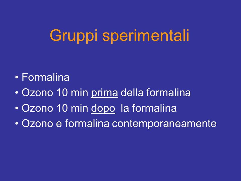 Gruppi sperimentali Formalina Ozono 10 min prima della formalina