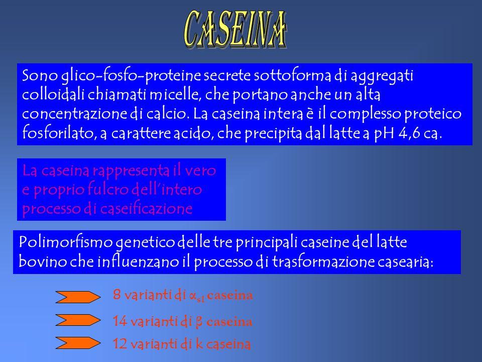 CASEINa