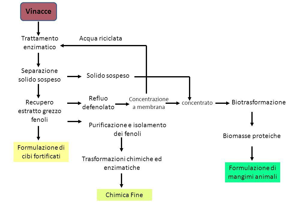 Vinacce Trattamento enzimatico Acqua riciclata