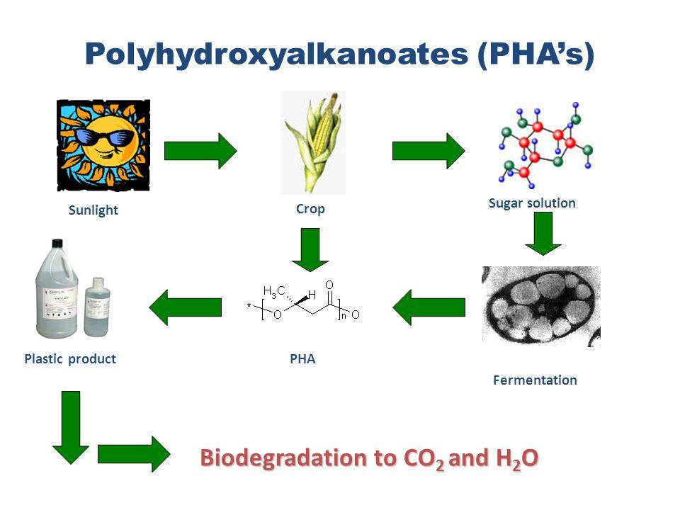 Polyhydroxyalkanoates (PHA's)