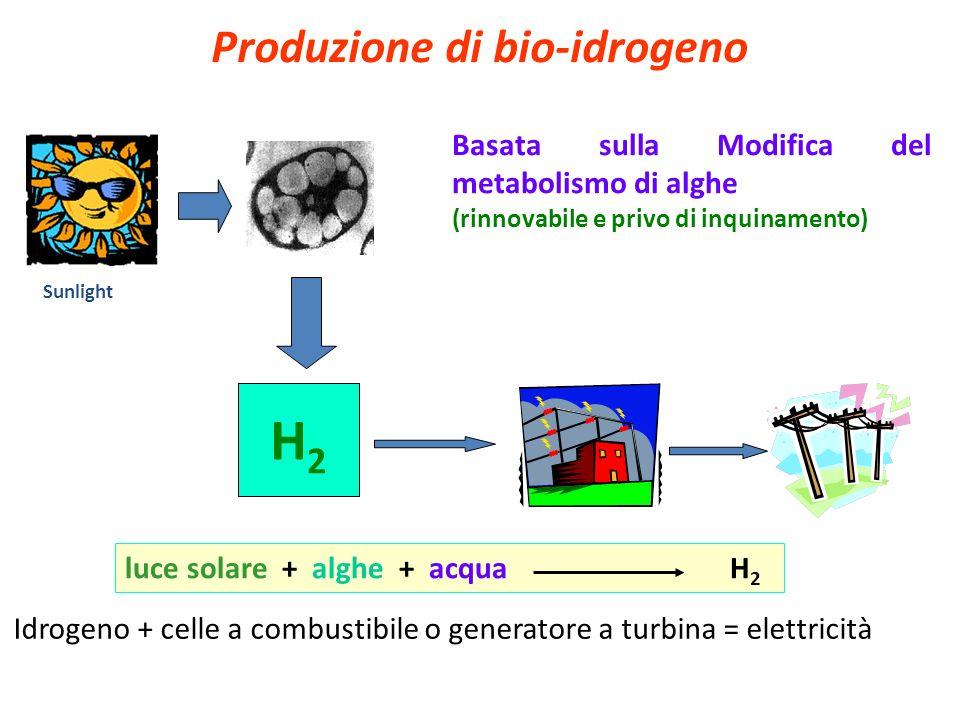 Produzione di bio-idrogeno