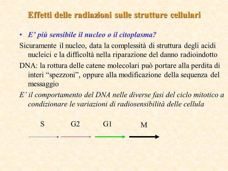 Effetti delle radiazioni sulle strutture cellulari