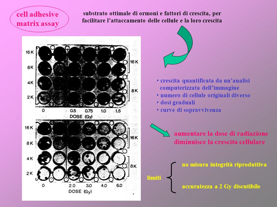 cell adhesive matrix assay