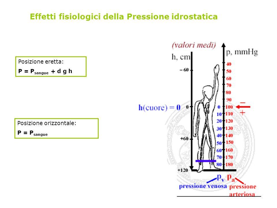 Effetti fisiologici della Pressione idrostatica