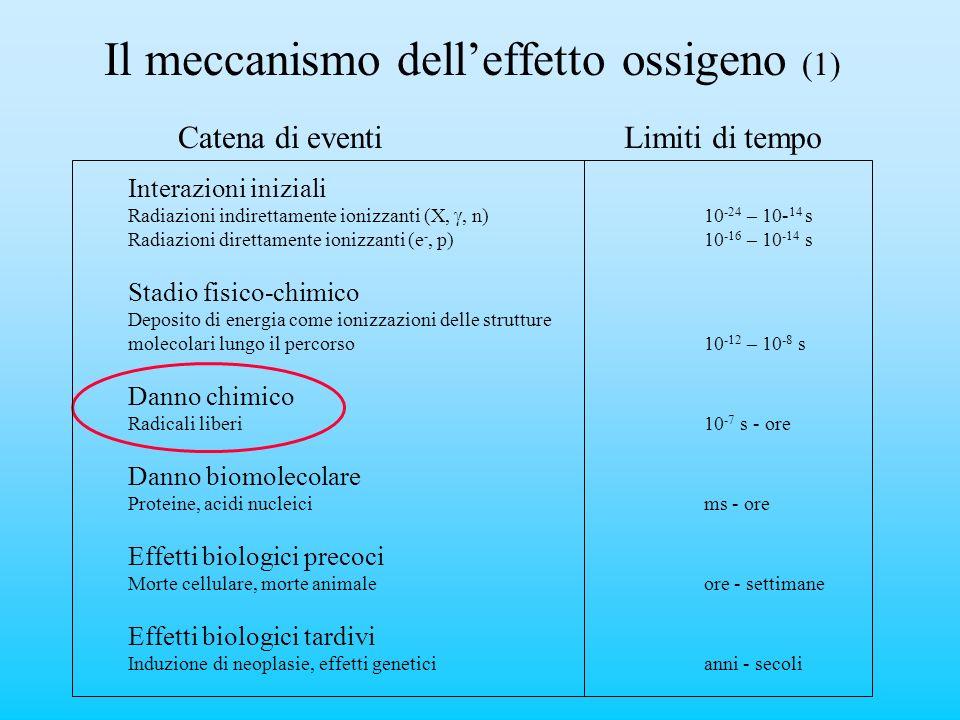 Il meccanismo dell'effetto ossigeno (1)
