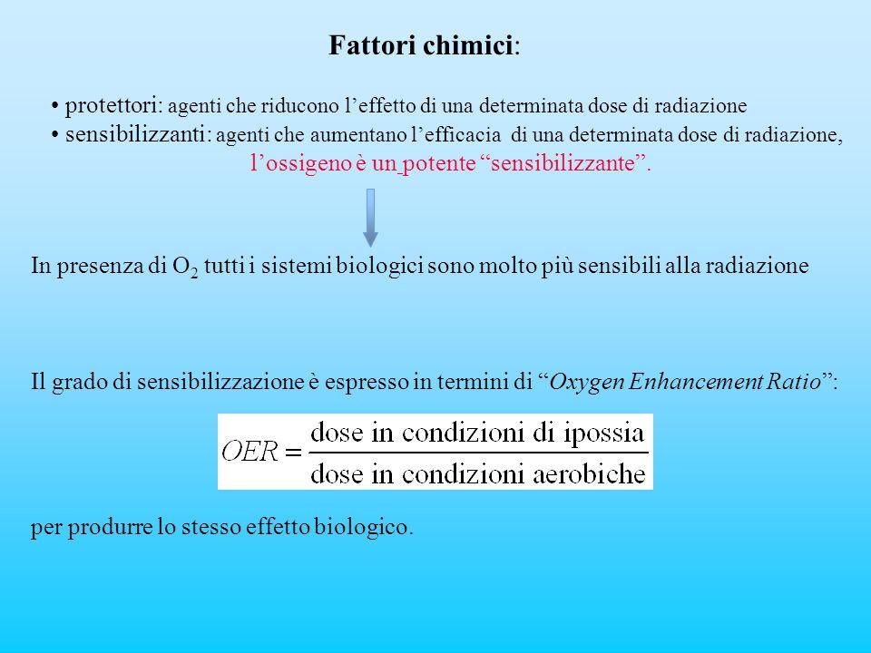 Fattori chimici: protettori: agenti che riducono l'effetto di una determinata dose di radiazione.