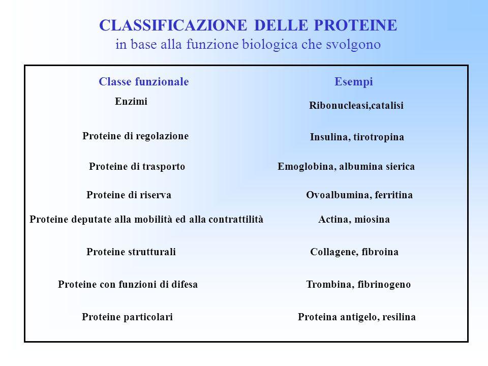 CLASSIFICAZIONE DELLE PROTEINE