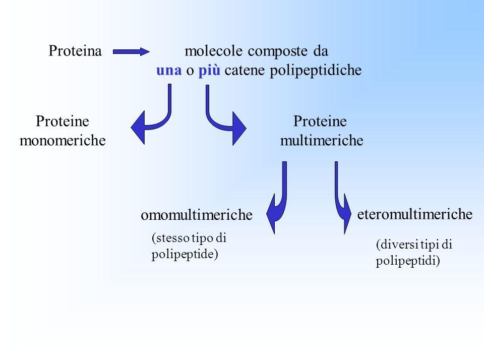 una o più catene polipeptidiche