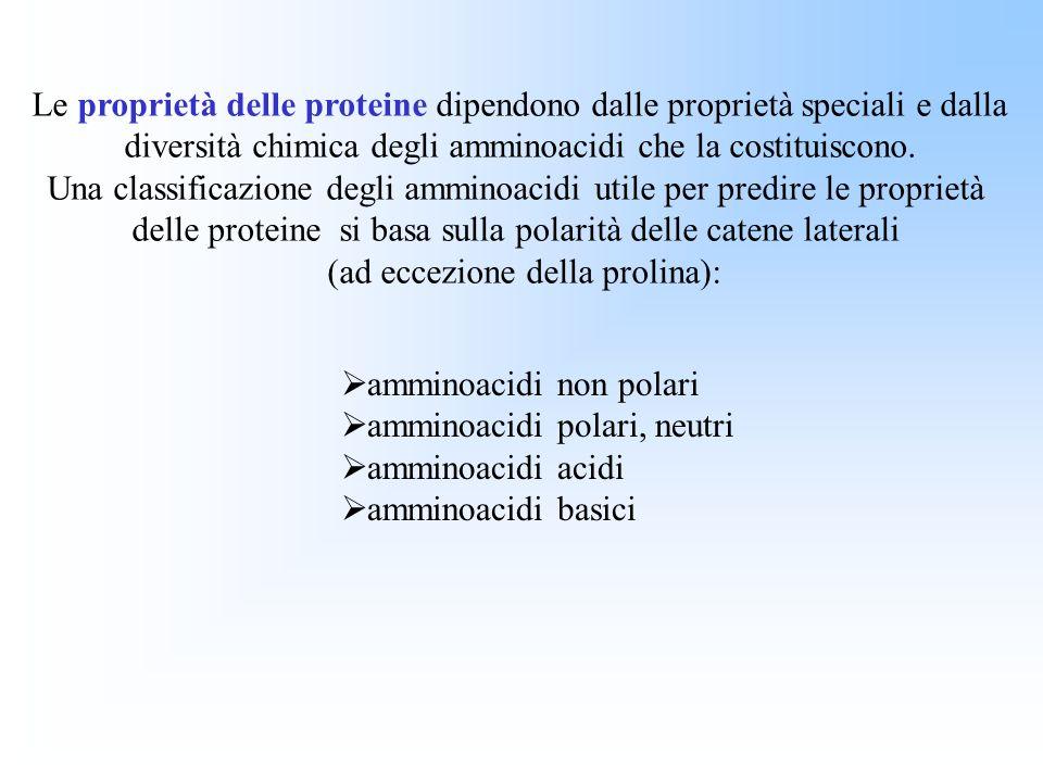 Le proprietà delle proteine dipendono dalle proprietà speciali e dalla