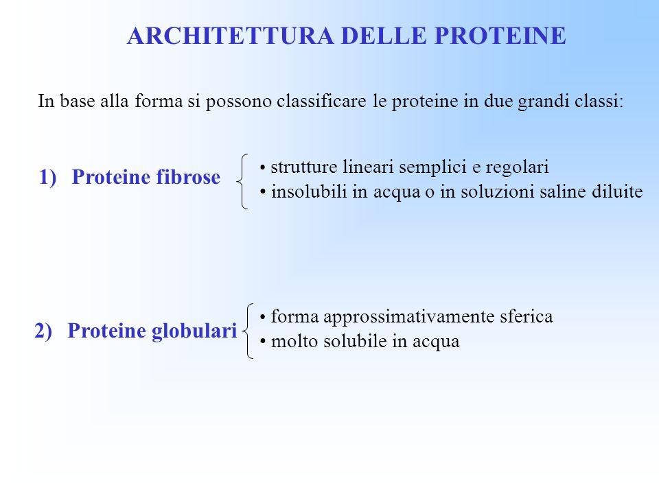 ARCHITETTURA DELLE PROTEINE