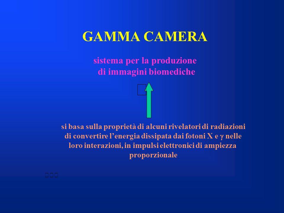 GAMMA CAMERA sistema per la produzione di immagini biomediche
