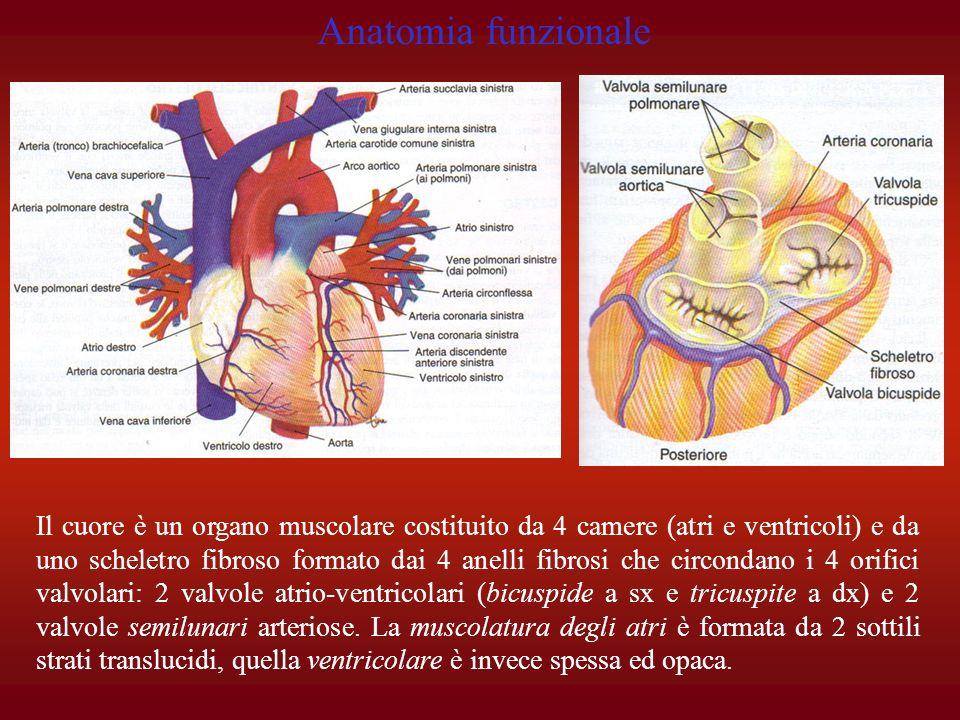 Anatomia funzionale