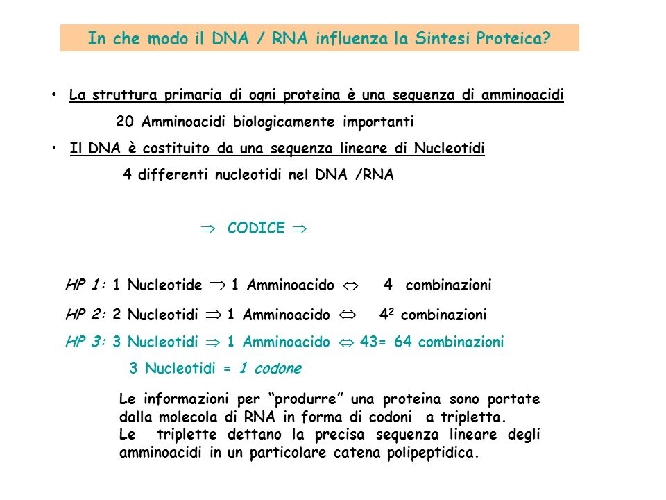 In che modo il DNA / RNA influenza la Sintesi Proteica