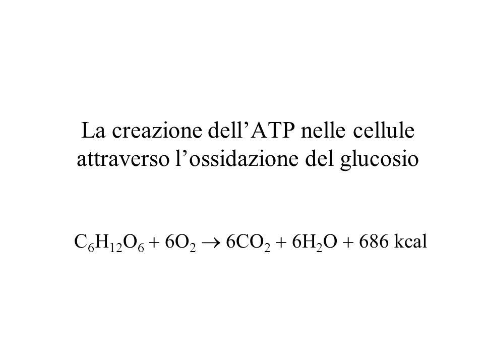 La creazione dell'ATP nelle cellule attraverso l'ossidazione del glucosio C6H12O6  6O2  6CO2  6H2O  686 kcal