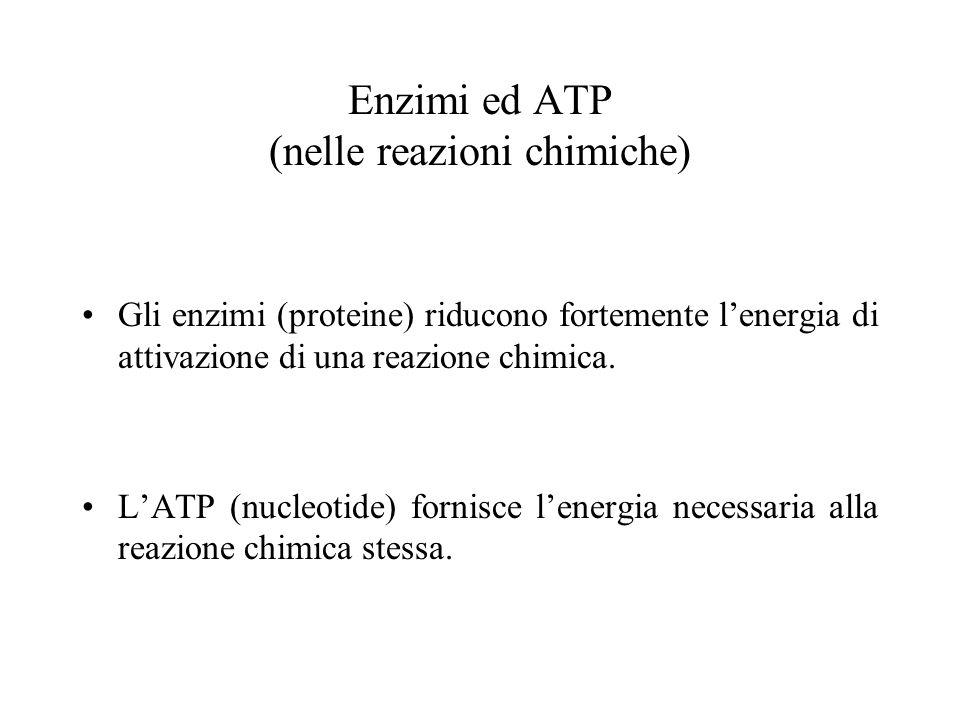 Enzimi ed ATP (nelle reazioni chimiche)
