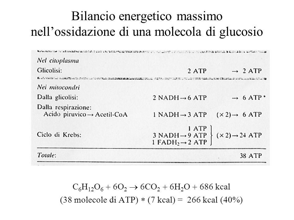 (38 molecole di ATP)  (7 kcal) = 266 kcal (40%)