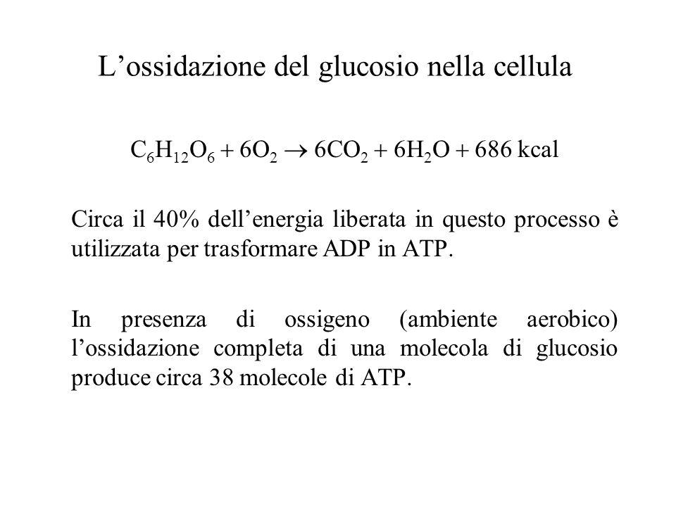 L'ossidazione del glucosio nella cellula