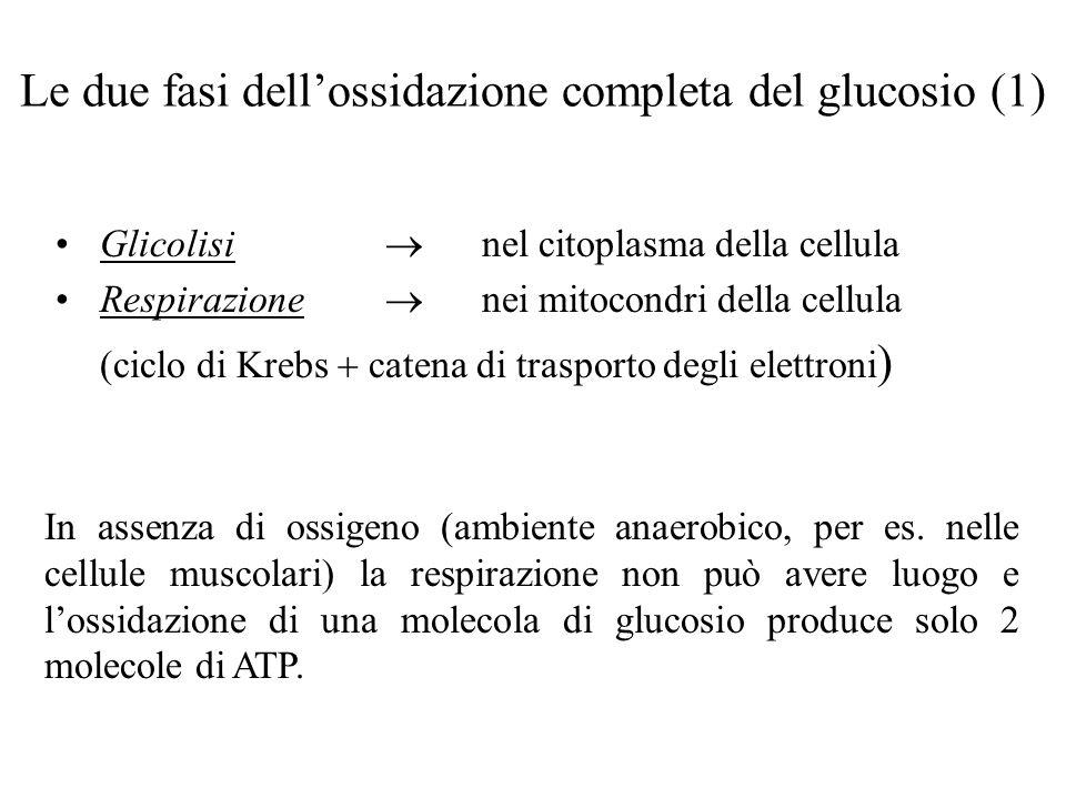 Le due fasi dell'ossidazione completa del glucosio (1)