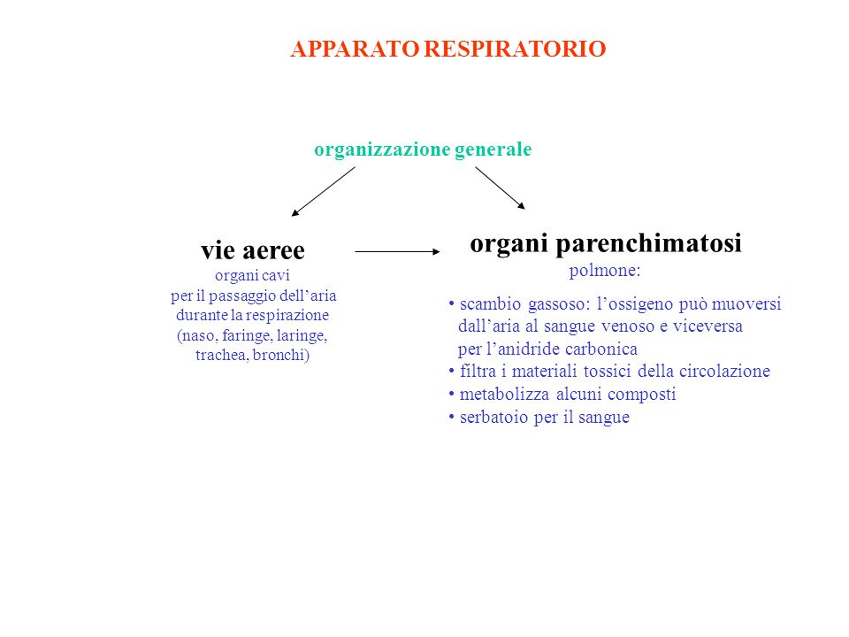 organi parenchimatosi