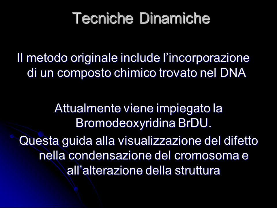 Attualmente viene impiegato la Bromodeoxyridina BrDU.