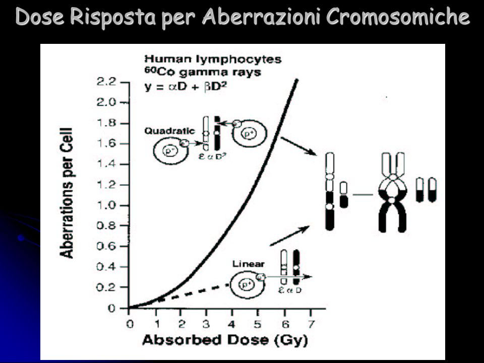 Dose Risposta per Aberrazioni Cromosomiche