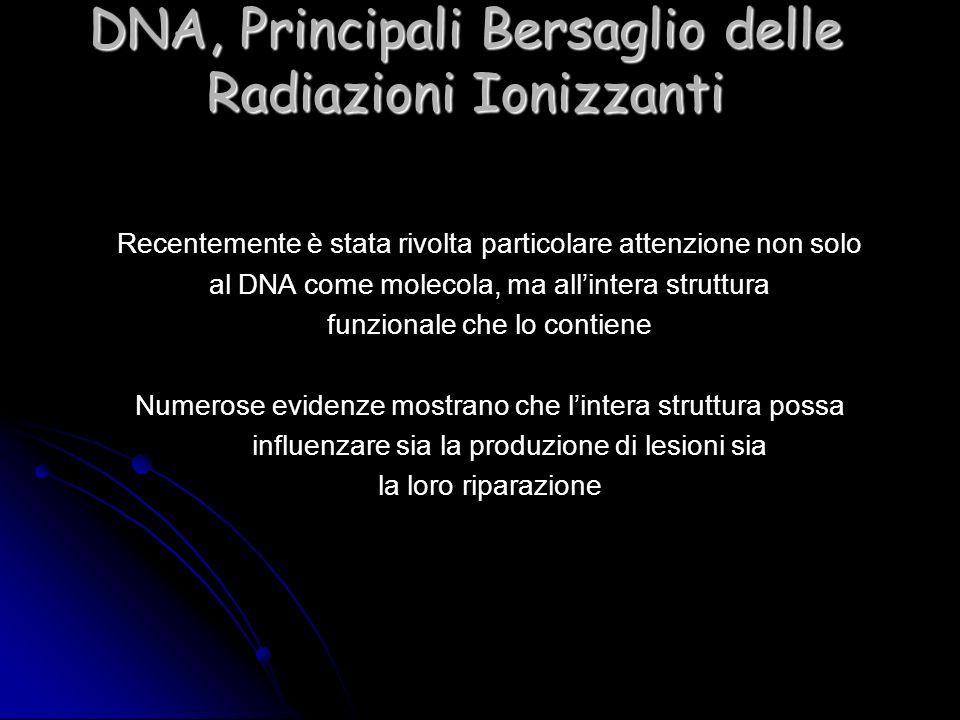 DNA, Principali Bersaglio delle Radiazioni Ionizzanti