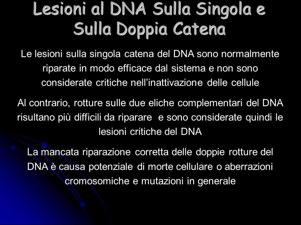 Lesioni al DNA Sulla Singola e Sulla Doppia Catena