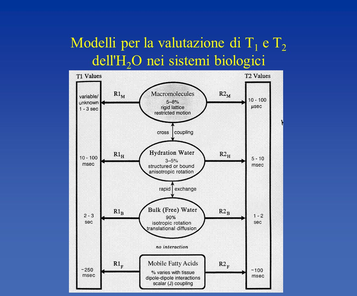 Modelli per la valutazione di T1 e T2 dell H2O nei sistemi biologici