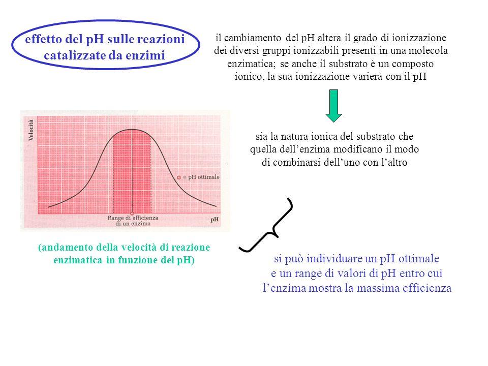 effetto del pH sulle reazioni catalizzate da enzimi