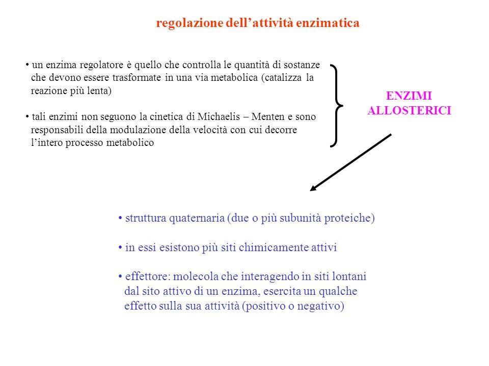 regolazione dell'attività enzimatica