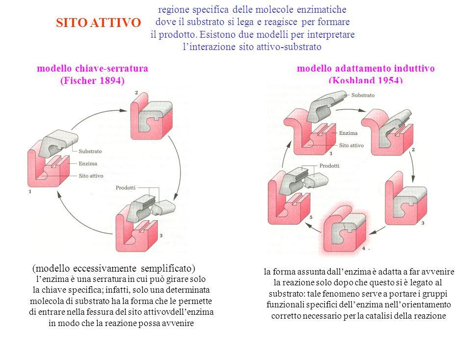 modello chiave-serratura modello adattamento induttivo