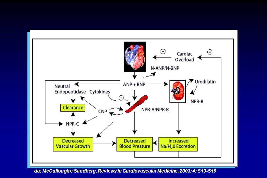 da: McCullough e Sandberg, Reviews in Cardiovascular Medicine, 2003; 4: S13-S19