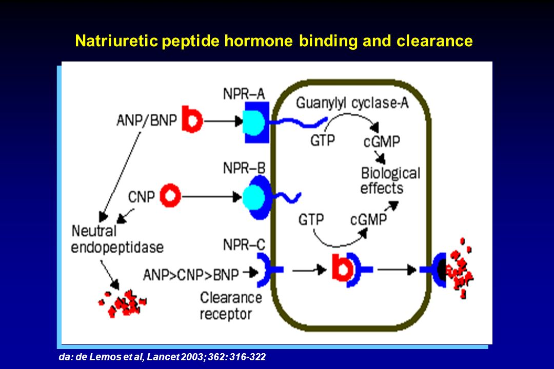 Natriuretic peptide hormone binding and clearance
