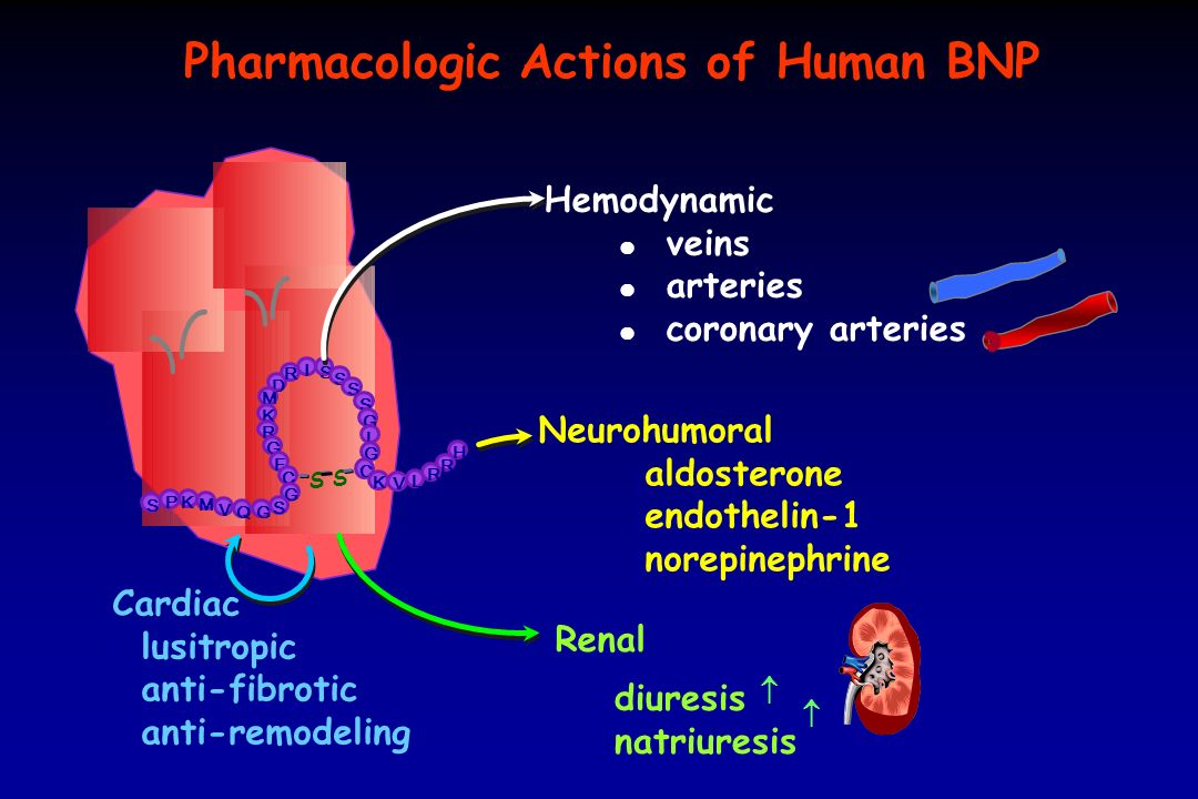 Pharmacologic Actions of Human BNP