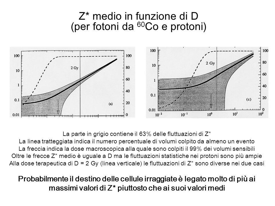 Z* medio in funzione di D (per fotoni da 60Co e protoni)
