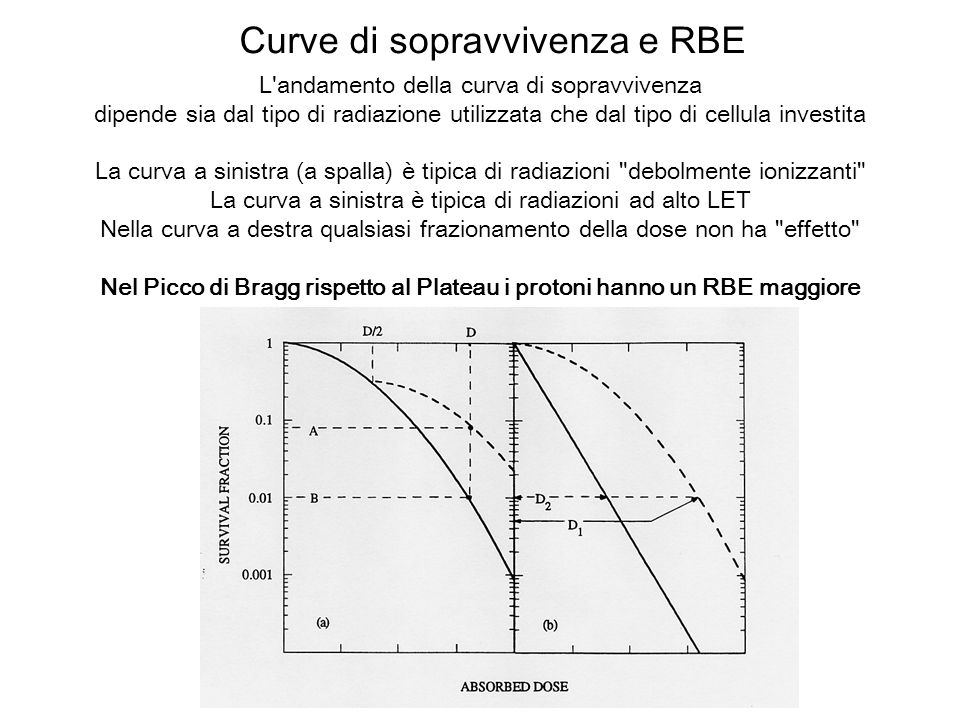 Nel Picco di Bragg rispetto al Plateau i protoni hanno un RBE maggiore