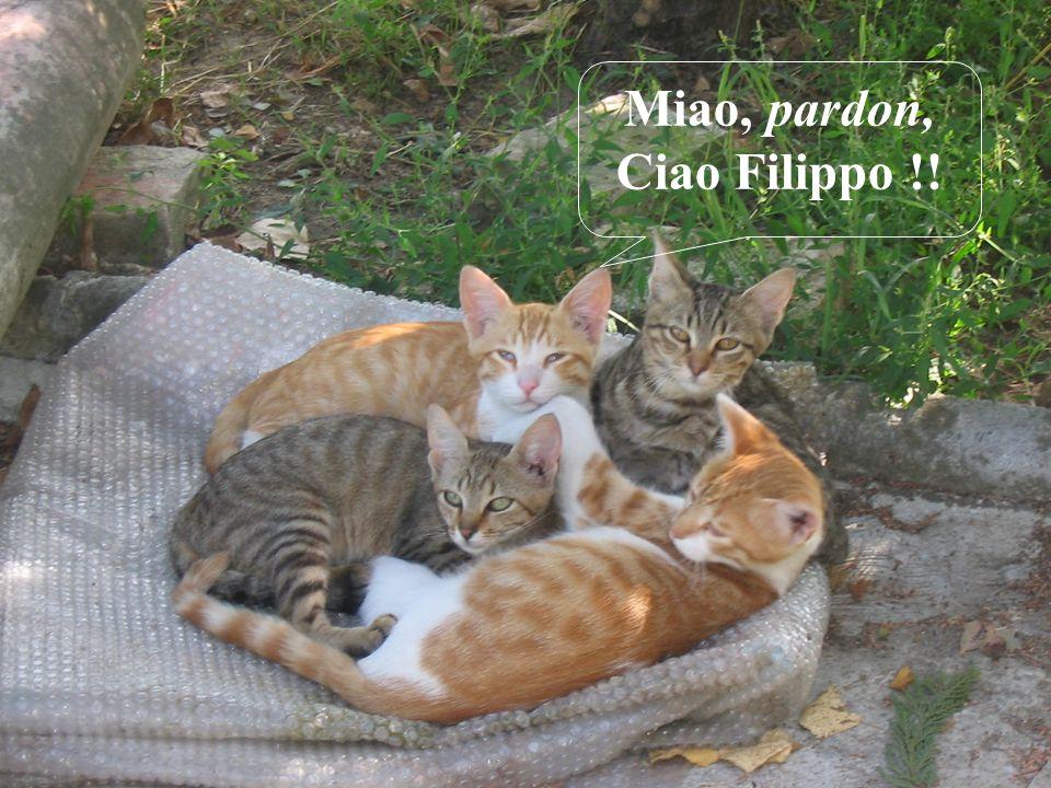 Miao, pardon, Ciao Filippo !!