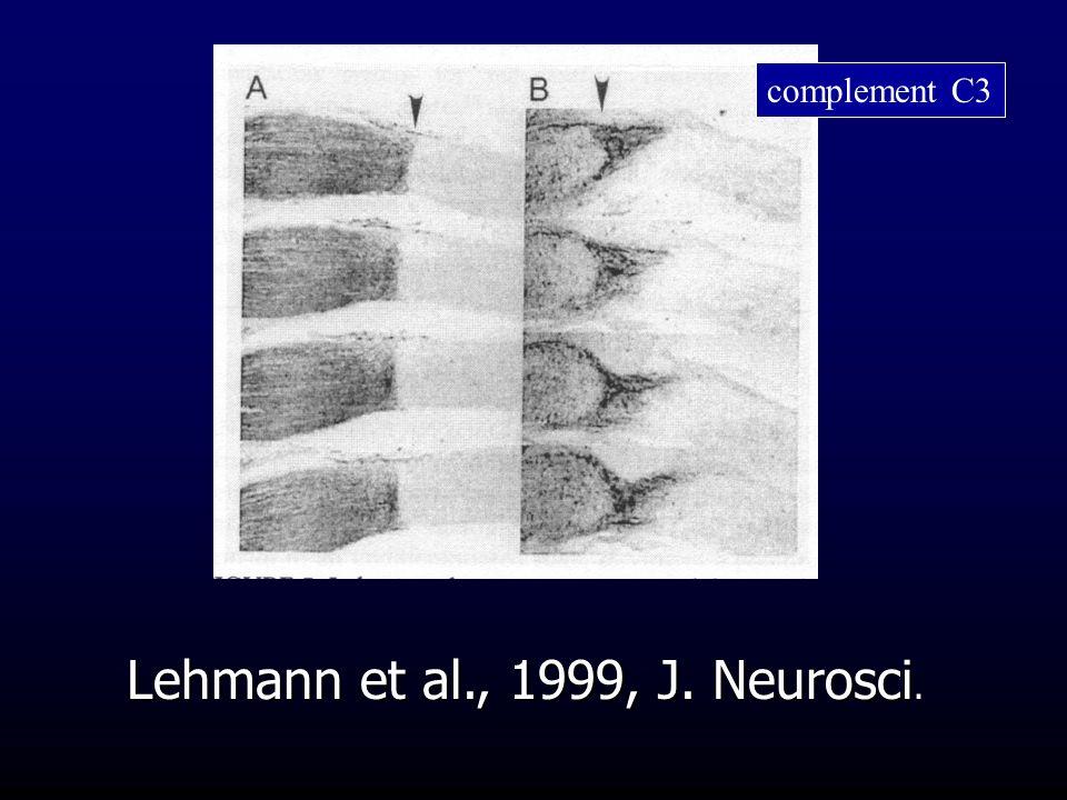 Lehmann et al., 1999, J. Neurosci.