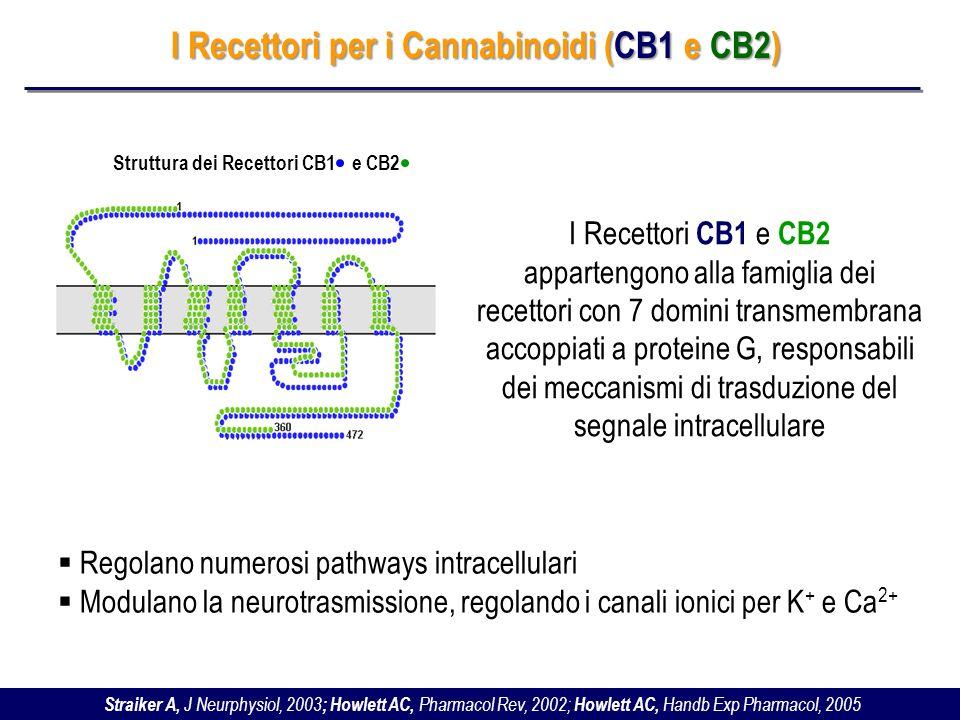 I Recettori per i Cannabinoidi (CB1 e CB2)