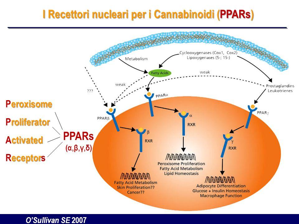 I Recettori nucleari per i Cannabinoidi (PPARs)