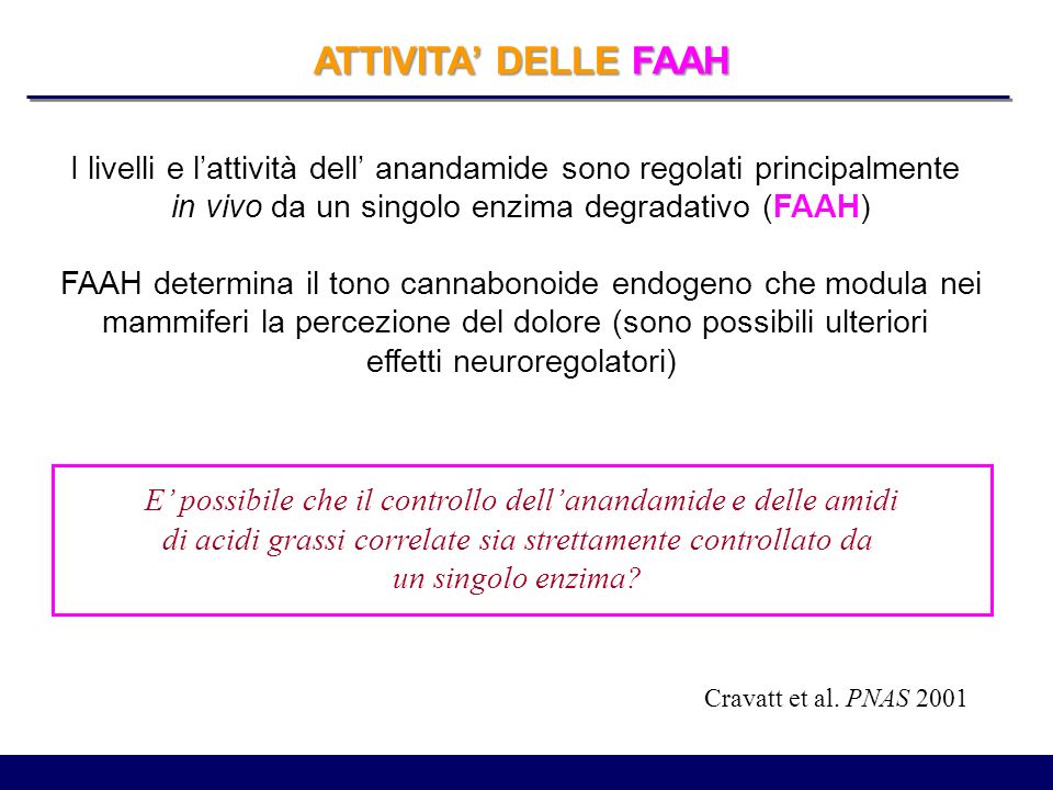 ATTIVITA' DELLE FAAH I livelli e l'attività dell' anandamide sono regolati principalmente. in vivo da un singolo enzima degradativo (FAAH)