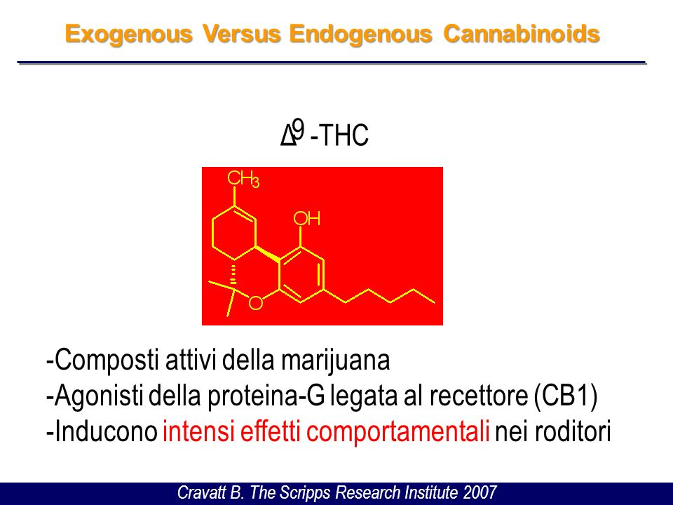 Exogenous Versus Endogenous Cannabinoids