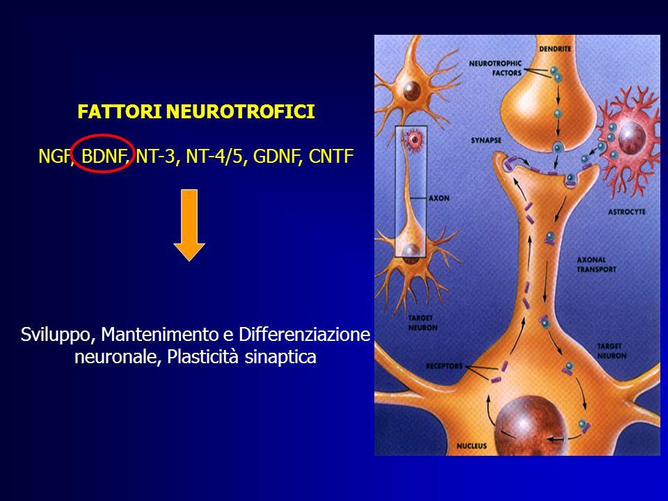 NGF, BDNF, NT-3, NT-4/5, GDNF, CNTF